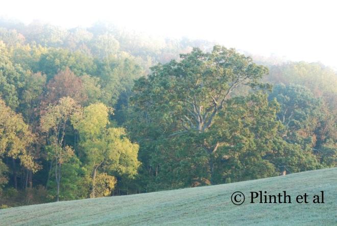 Early morning at Meadowburn Farm