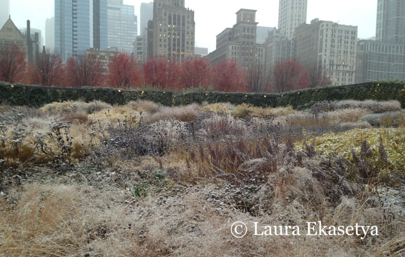 The first snowfall of Winter 2013-14 falls upon the maples still in autumnal foliage.