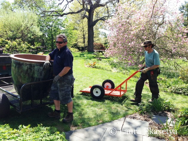 Guest gardening with Chanticleer horticulturist Dan Benarcik and assistant Tom Maczko earlier in spring