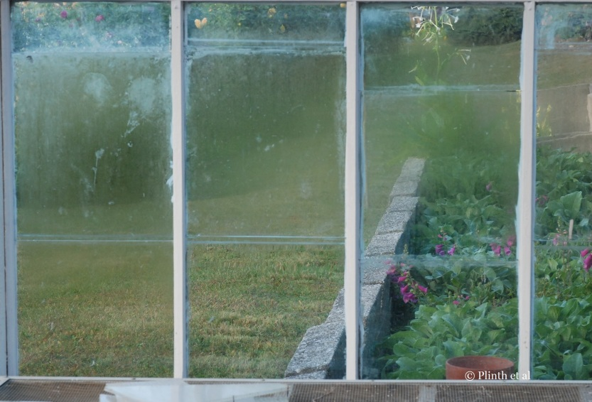Digitalis (foxgloves) fill the cold frames as seen from the inside of the greenhouse now emptied of its seedlings.