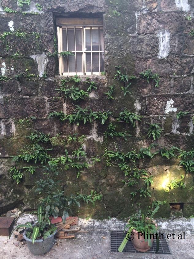 Ferns on Walls