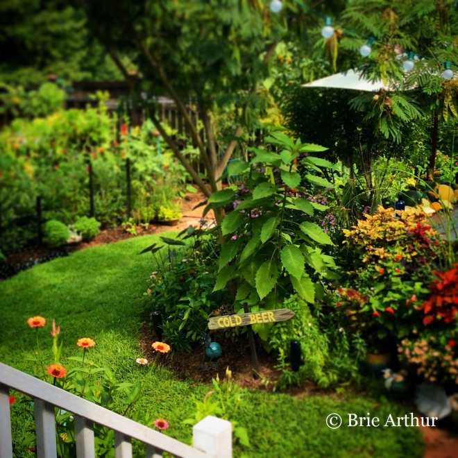 Brie's garden shows the influence of her time spent at Nancy Goodwin's Montrose garden in Hillsborough.