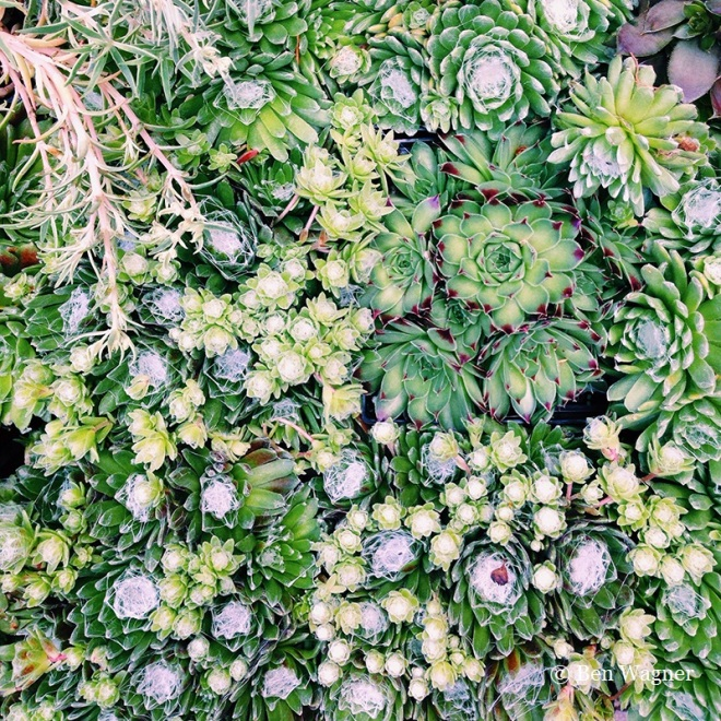 Hens and chicks at Sprout, Brooklyn, NY.