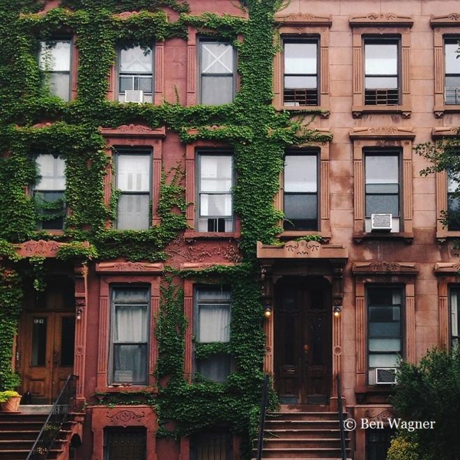 Ivy clad facade of row houses in Bedford Stuyvesant, Brooklyn, NY.