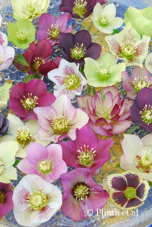 Hellebore_Floating_Bowl_Pine_Knot_Farms