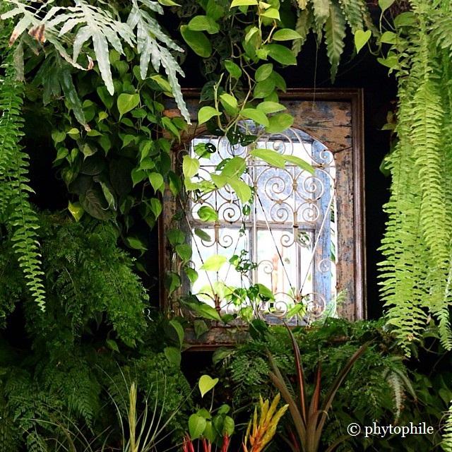 Window Wall Planting
