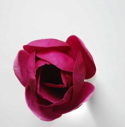 Floral Fridays: Magnolia BlackTulip