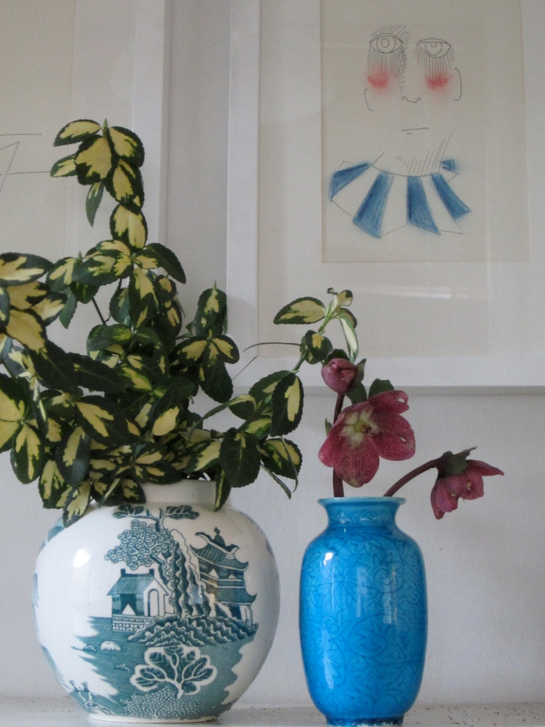 Euonymus japonica 'Aureo Variegata'