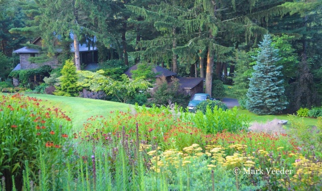 The view from the perennial plantings towards the house surrounded by a woodland garden.