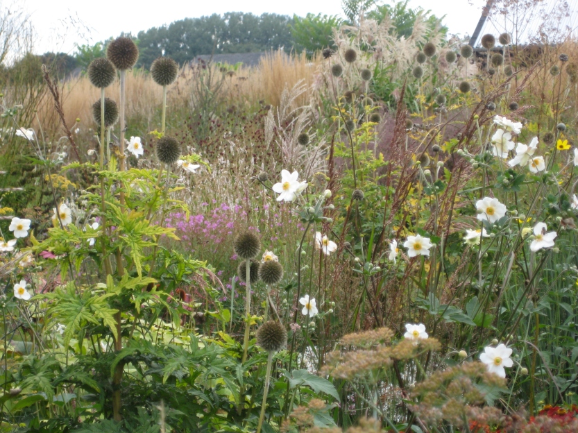 Hummelo, Plant Groupings and Blooms