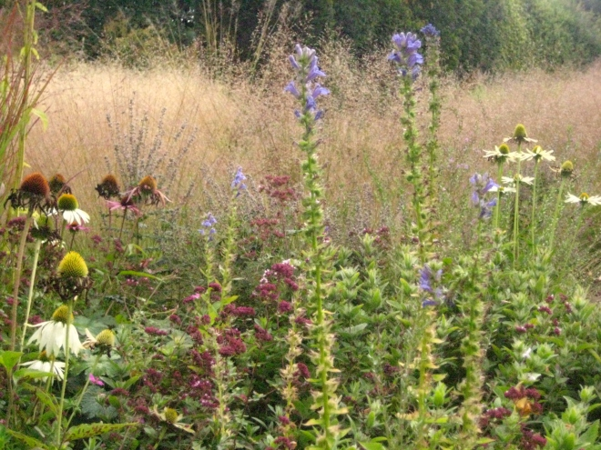 Hummelo, Plant Groupings and Grasses