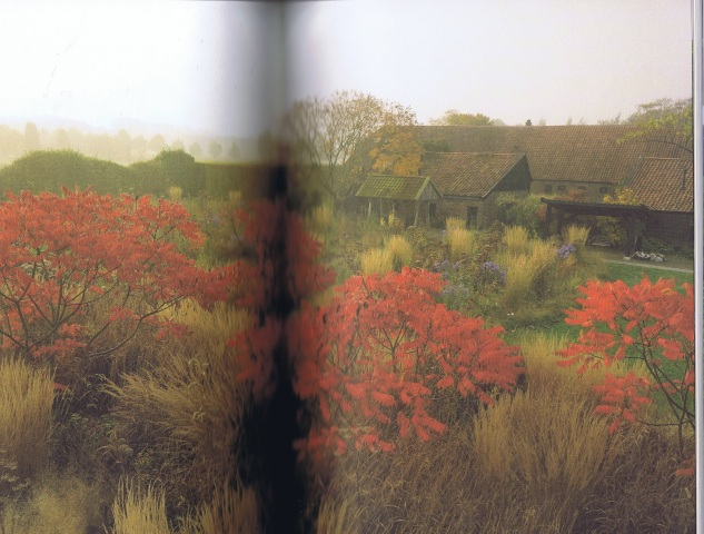 Rhus typhina is a North American shrub known for its suckering habit and bright crimson autumnal foliage - Oudolf probably saw it during his North American trips and was inspired to use for structure at Hummelo as seen here from the book.