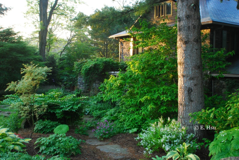Peeking through the trees, the light is caught against the facade of the handsome stone house surrounded by mature shade plantings, none of which existed when Mark first bought the property.