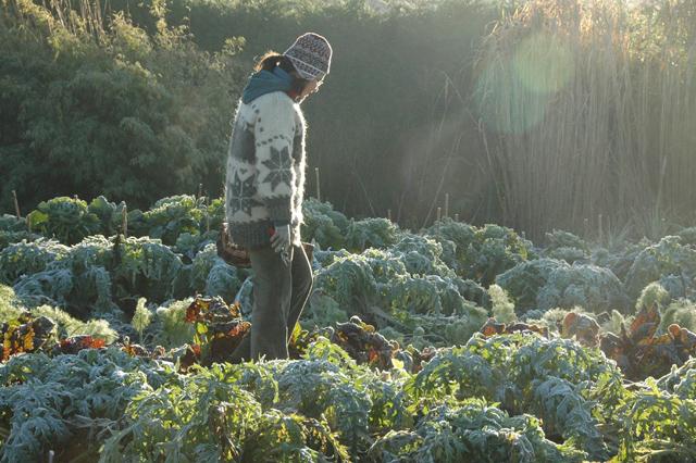Foreign Gardeners: Gabriella, from Hungary toEngland
