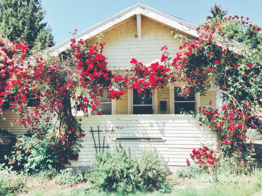Unexpected sights, such as swags of red roses gracing the front facade of this modest house, always inspire Kate to pause and take photographs.