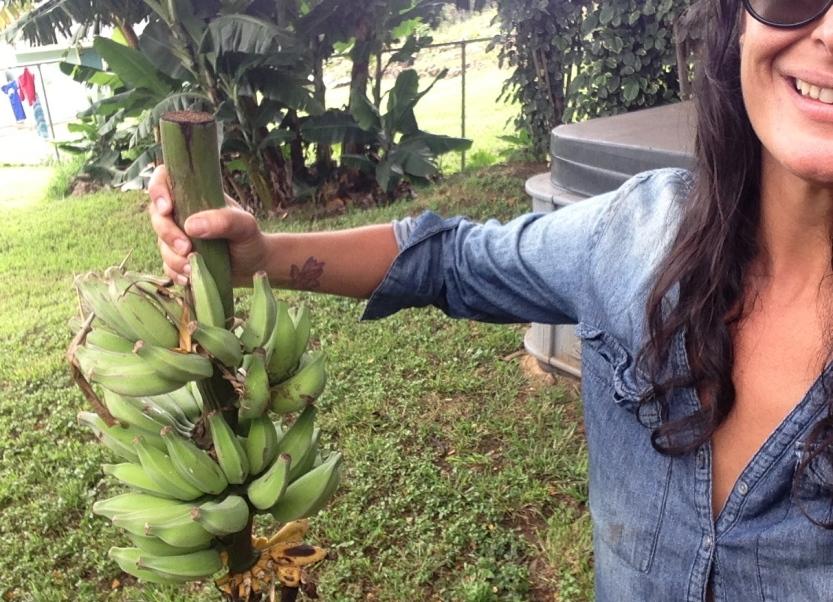 GraceMartinelli-Hawaii-bananas