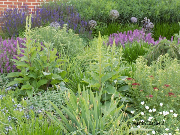 Austin's personal garden in Iowa reveals the multi-layered planting that holds seasonal interest from summer until autumn.