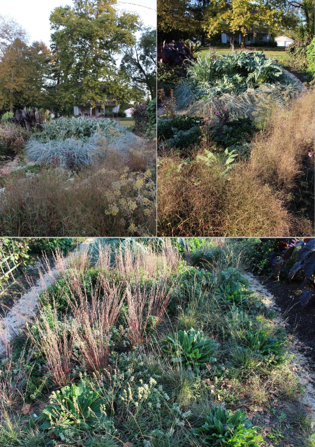 In October, the bleached hues of the grasses mark a momentary seasonal shift in light while Cynara cardunuculus and Leymus arenarius remain steadfastly defiant in their icy demeanors. Martha's garden was unwavering strong throughout the season, and because it utilizes more perennials and grasses than annuals, its winter interest will likely be strong.