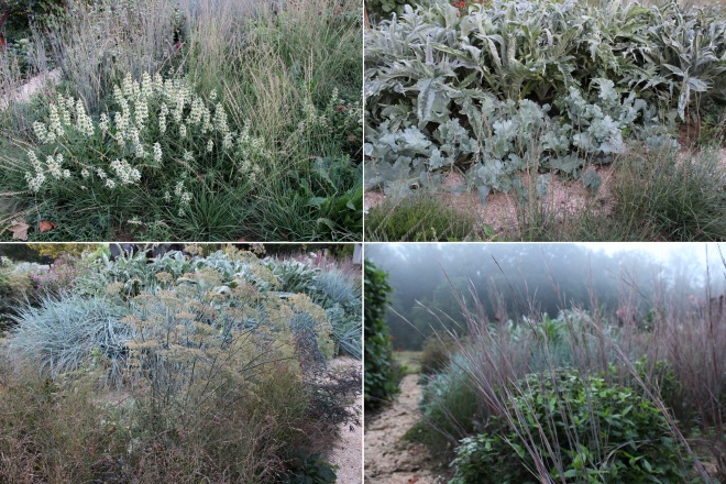 In a garden that deploys strong textural contrasts in foliage, like the jagged edges of Cynara cardunculus and curvaceous folds of Crambe maritima (sea kale), flowers seem superfluous, and where they do exist, they become sculptural selves after death. Both Monarda punctata (upper left hand pic) and Foeniculum vulgare 'Purpureum' (lower left hand pic) have dual roles in life and death.