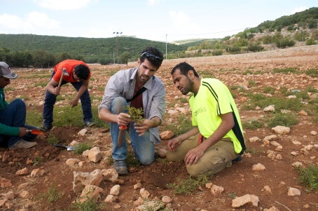 First is me collecting Glycirrhiza glabra with visitors from Oman Botanic Garden in Ajloun, Jordan