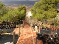 Nursery, at the RBG site'