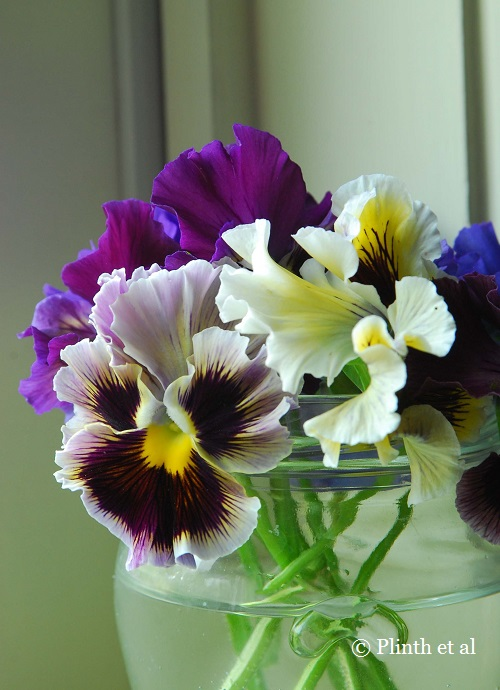 A posy of pansies