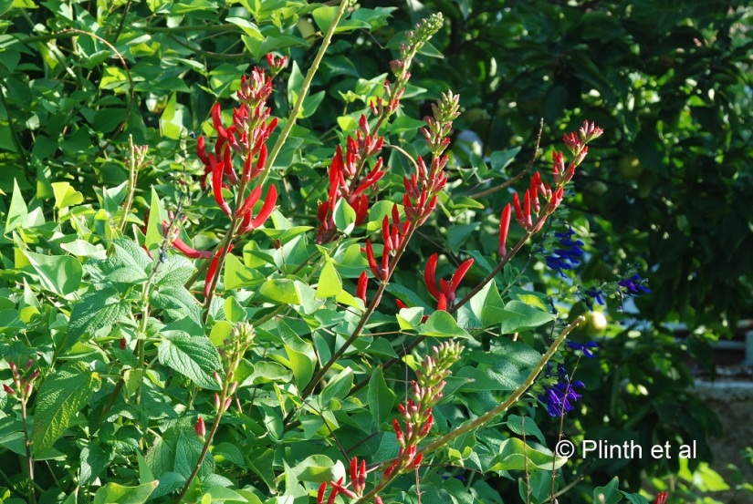 Eleftherio's Plant Picks