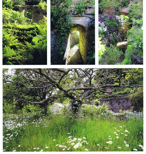Cultivated wilderness as seen in these garden scenes from Tremarton, the Bannermans' second personal garden in Cornwall.