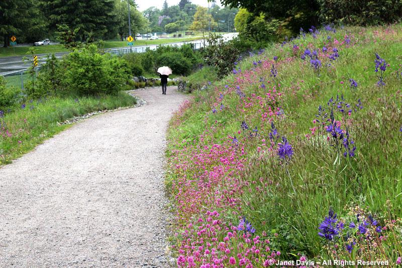 ubcs-garry-oak-meadow-in-early-may