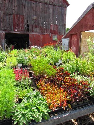5-10-5: Horticulturist, Garden Designer, Nursery Owner Helen O'Donnell of BunkerFarm